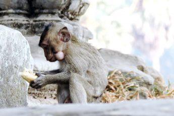Baby-Affe ist Brötchen